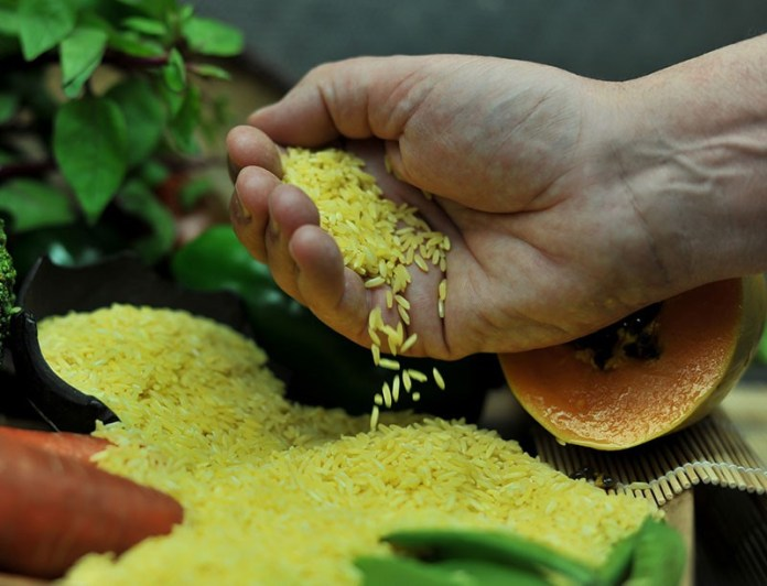 Golden Rice and its impact on human life