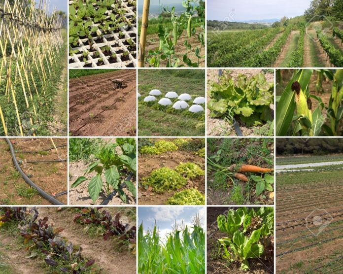 Modern Ways and Obstructions in Organic Farming of Pakistan