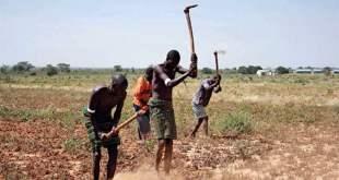 Fighting-Poverty-Through-Agriculture-Saad-ur-rehman-malik