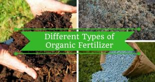DIFFERENT-TYPES-OF-ORGANIC-FERTILIZER-FOR-YOUR-GARDEN-by-saad-ur-rehman-malik