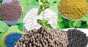 Fertilizers-available-in-Pakistan-by-saad-ur-rehman-malik