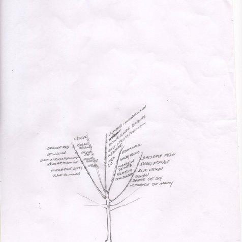 Agrikultura-Plum-East