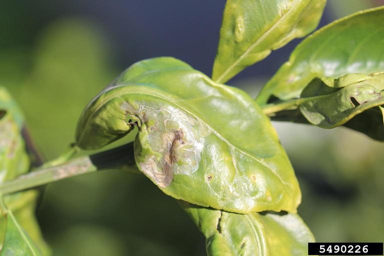 Mold On Plants Treatment