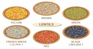 Lentil cultivation should be completed by 15th