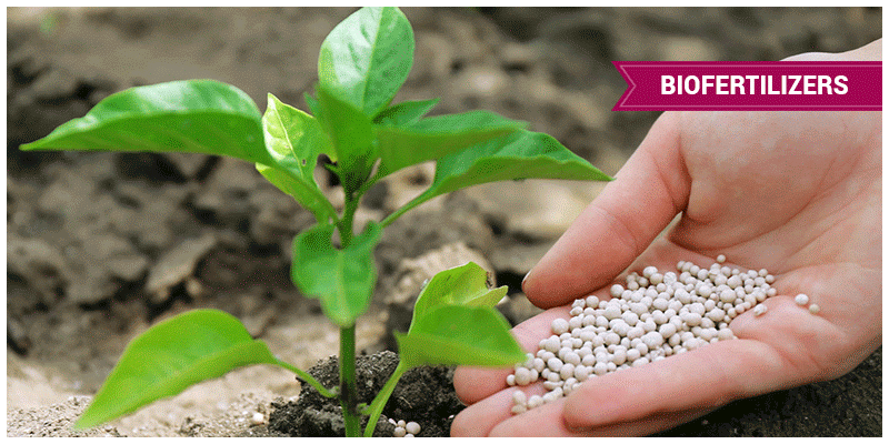 Fertilizers and Environmental Pollution