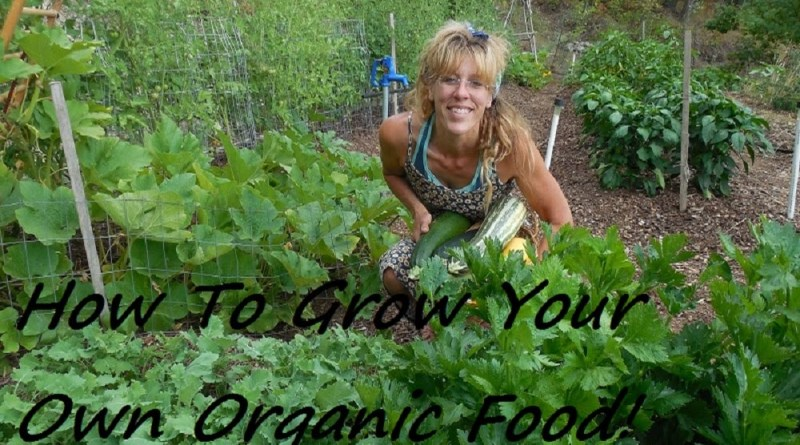 How To Grow a FULLY Organic Vegetable Garden