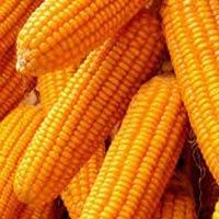 Kharif crops, Vegetables, Fruits and Pulses
