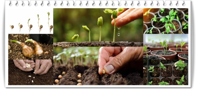 Letdowns of seed producing sectors in Pakistan