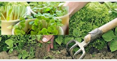 Basic Techniques in Organic Gardening