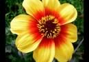 September Flowers: What's in Season
