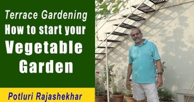 Organic Terrace Gardening Information