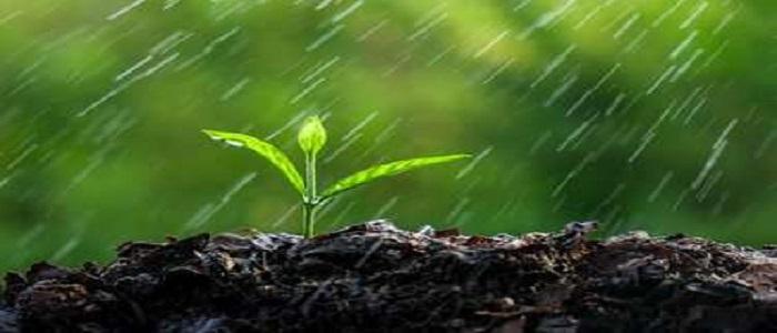 Experts hope of bumper crops due to rain spells