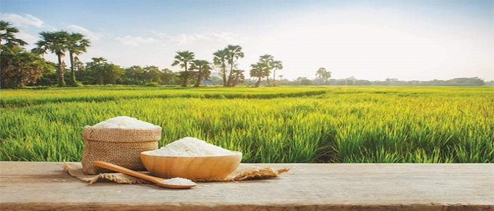 Pakistan's rice sector lagging behind in productivity