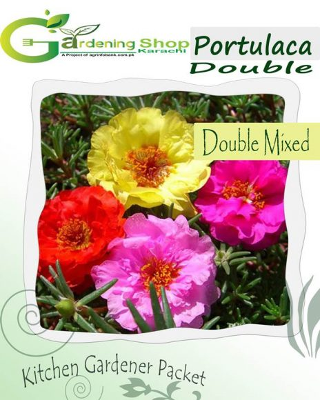 Portulaca Full Double Mixed