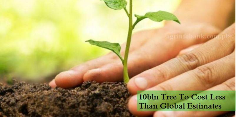 10bln Tree To Cost Less Than Global Estimates: Amin Aslam