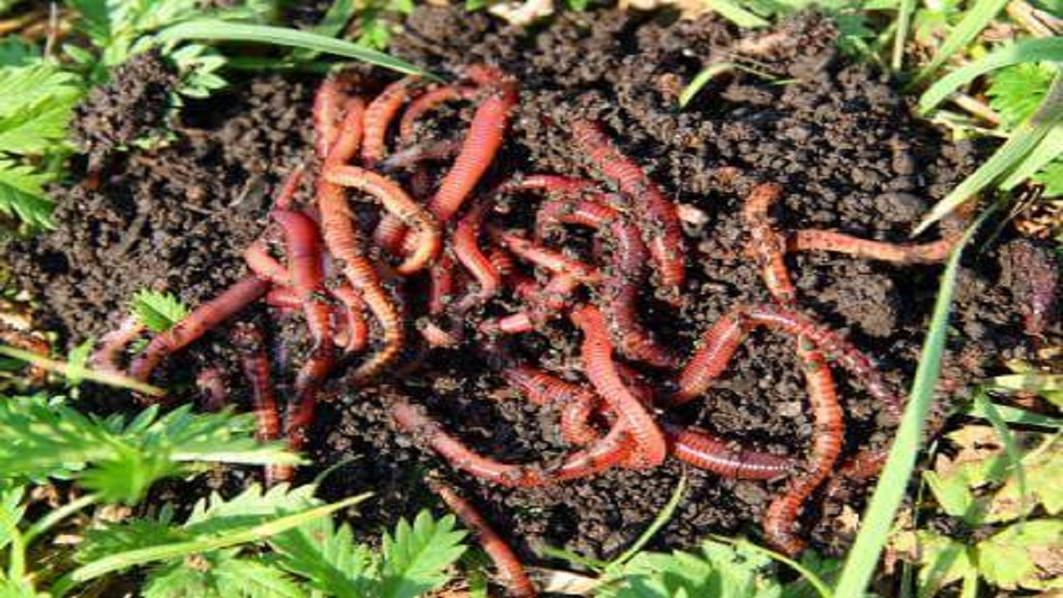 Vermicomposting Production, Packaging & Marketing: Pre-Feasibility Study