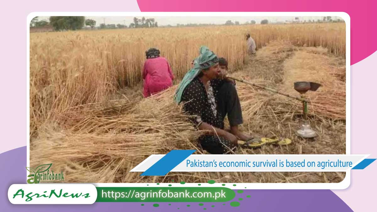 Pakistan's economic survival is based on agriculture: Fix it before we lose the opportunity!