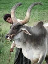 India 2006 © Agriversal Ltd