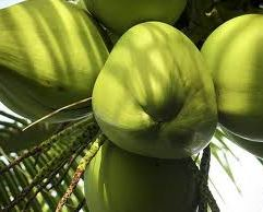 Coconut Derivatives Product