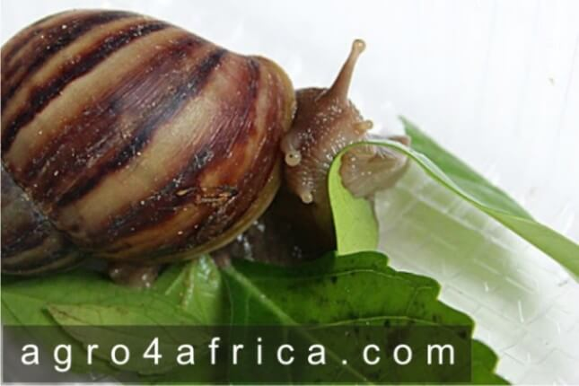 What do Snails Eat and drink? | A list of 7 categories of food for