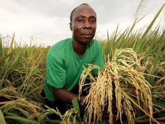 crop-farming-business-ideas-agro4africa
