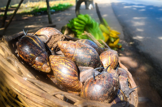 snails-for-sale-in-nigeria