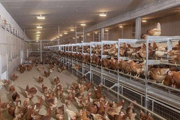 Multi-tier-poultry-housing-system-or-aviary