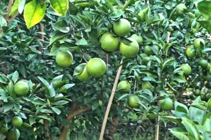 Green Malta
