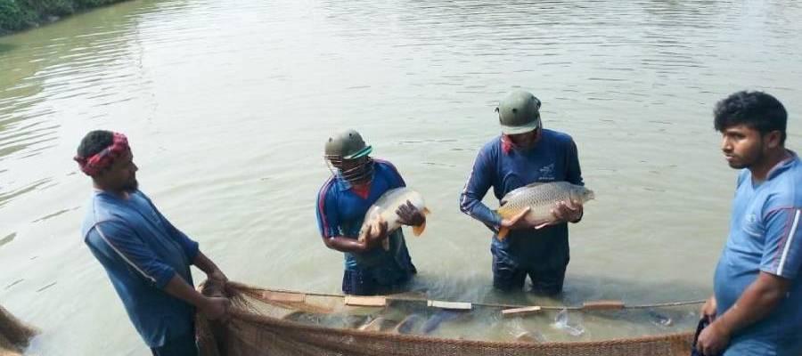 Winter Season Fish Culture