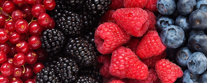 berries NOTICIA AGROBIEN