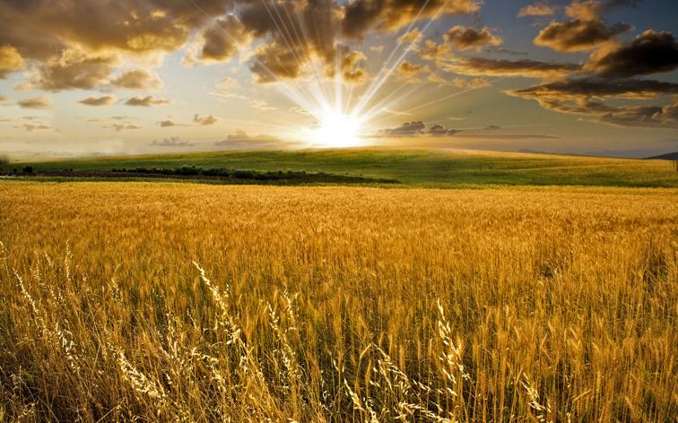 """La agricultura española: """"Un sector con mucho futuro, pero mucho por hacer"""""""