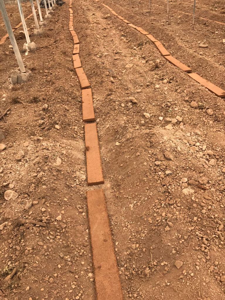El uso de la fibra de coco se extiende para mejorar la estructura de suelos hortícolas