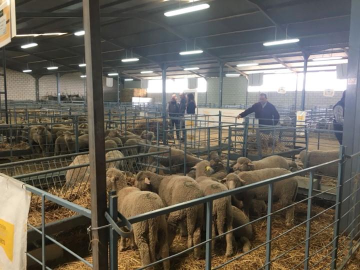 Sube el transporte interno de ganado pero baja el internacional por COVID-19