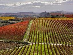 Los primeros descubes del Rioja de 2020 auguran una añada «única»