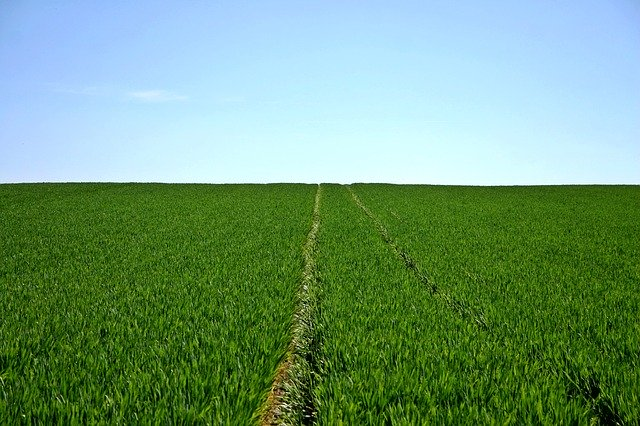 La biotecnología agrícola abarca la utilización de técnicas para mejorar la producción agrícola y contaminar menos el ambiente
