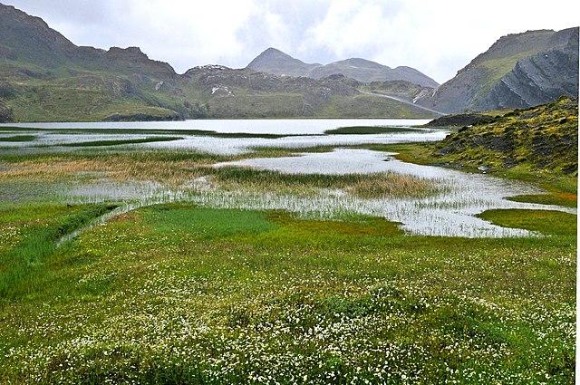 Las lagunas son ecosistemas de agua dulce y se caracterizan por ser más pequeñas que los lagos. Generalmente este tipo de ecosistemas se encuentran en ambientes de alta montaña y albergan una cantidad significativa de especies de animales y plantas.