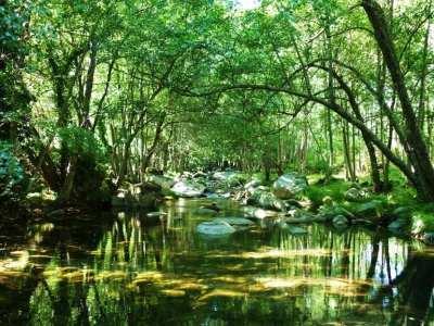 ecosistema artificial