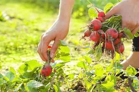¿Qué sembrar en verano?: Calendario de cultivos