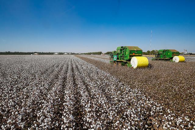 AAAA _ alogodao colheita maquinas