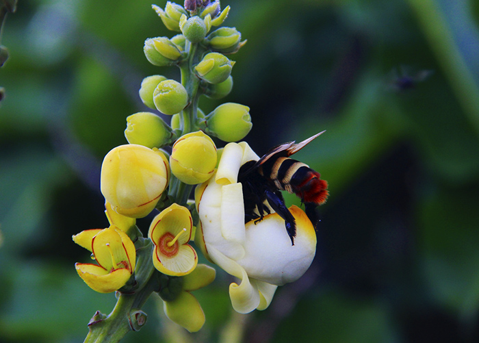 abelhas _ embrapa
