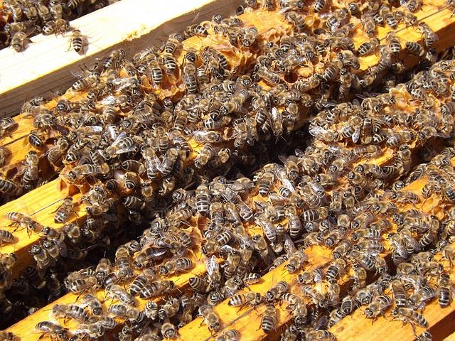abelhas rs