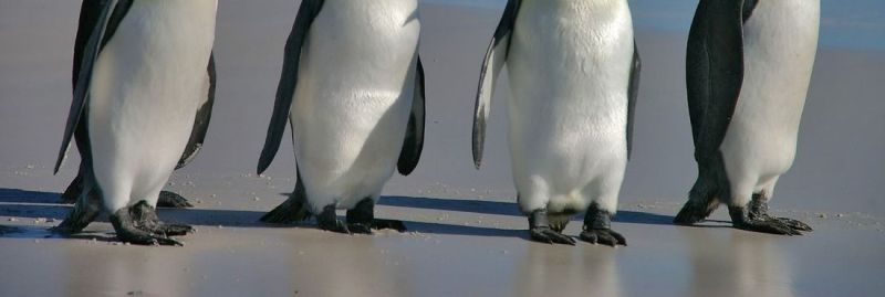 a pinguins ebc