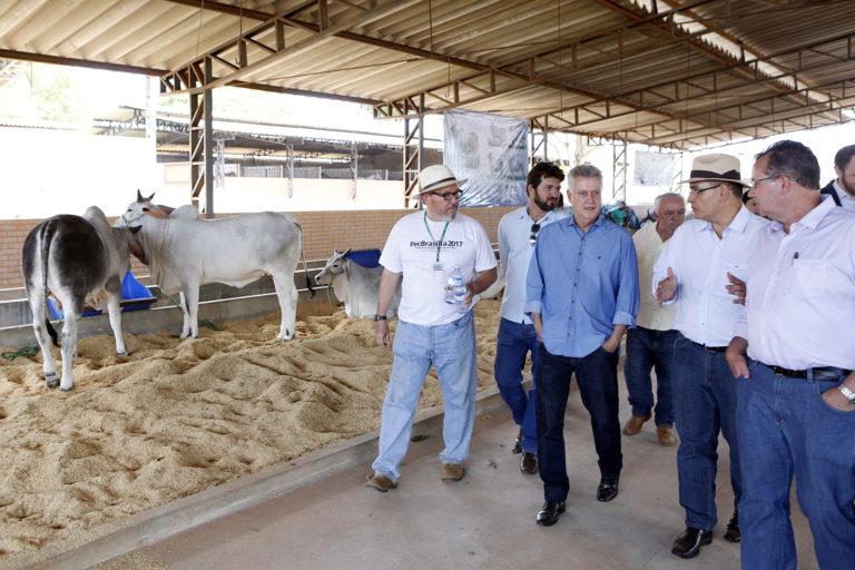 PecBrasília: mostra agropecuária reúne 150 criadores na Granja do Torto