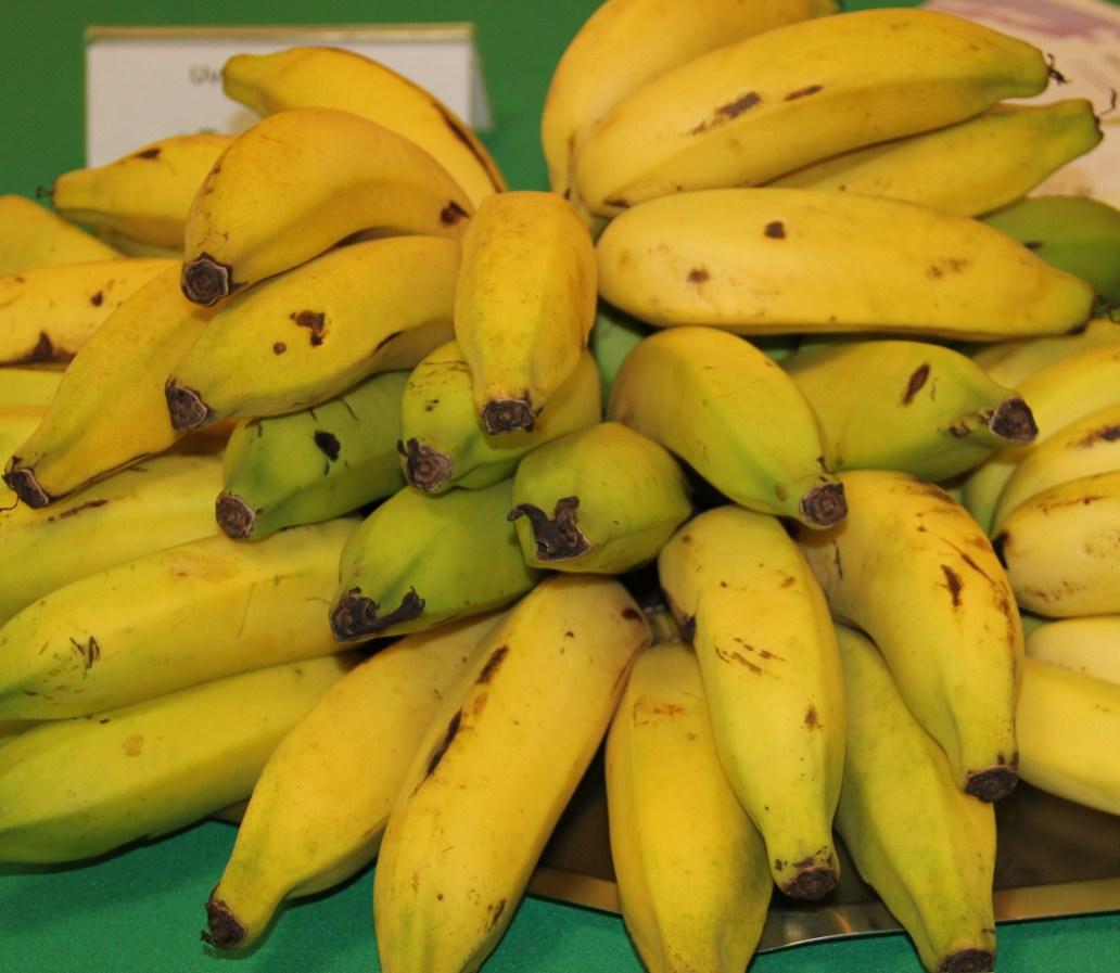 aa 1 _ banana