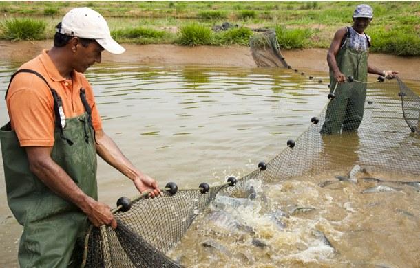 aa criação de peixes