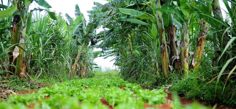 a _ agroecologia agencia brasilia