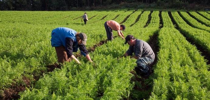 a agricultura familiar 18