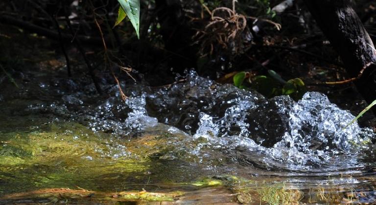 a nascente rio paulo araujo mma