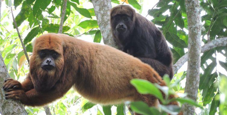 macaco-teste 1