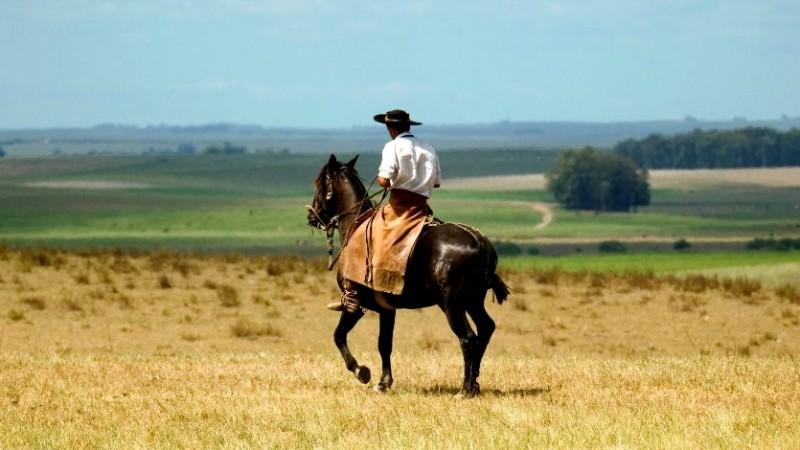 cavalos aplicativo